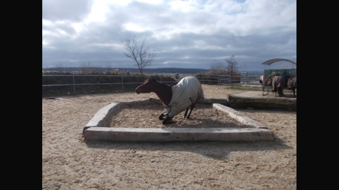 CAVALLO Stall-Scout