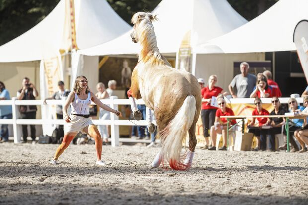 """CAVALLO kürte Sancho zum """"besten Kumpelpferd"""""""
