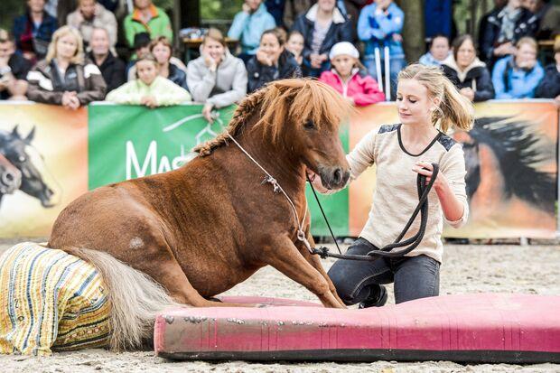 CAv Cavallo Cup Sieger Mediashow 2018 Maja Hegge