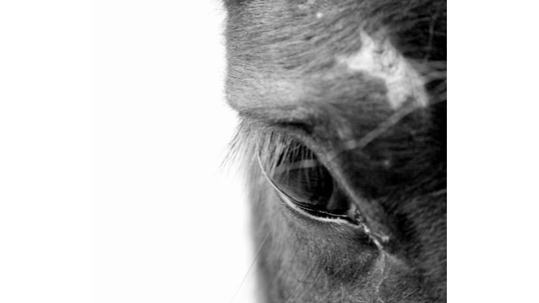 CAv Pferdeaugen Mix-Wallach MS