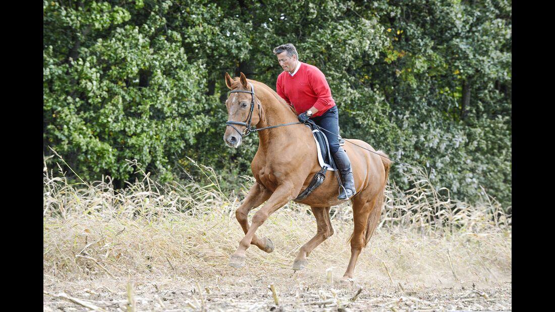 Cavallo Hautnah - Laussegger