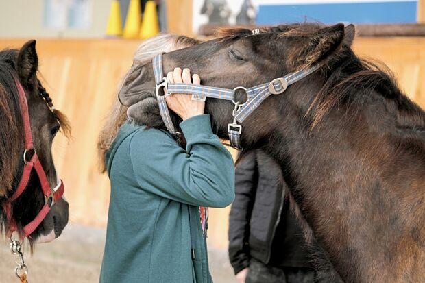 Coaching-Pferde