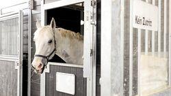 Corona beim Pferd