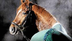 Dampfendes Pferd