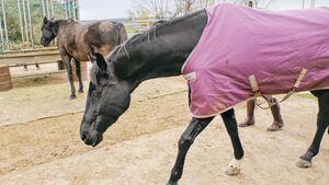 Das erste Dressurpferd