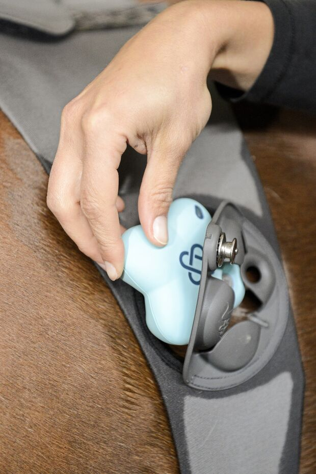 Der digitale Blick ins Pferd mit dem Piavet-System