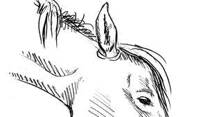Die Zeichnung eines sedierten Pferds: Der Kopf ist tief, die Ohren seitlich abgeklappt, die Augen halb geschlossen. Ober- und Unterlippe sind langgestreckt.