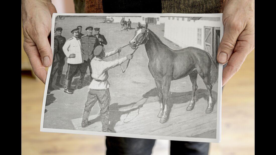 Die russischen Don Pferde
