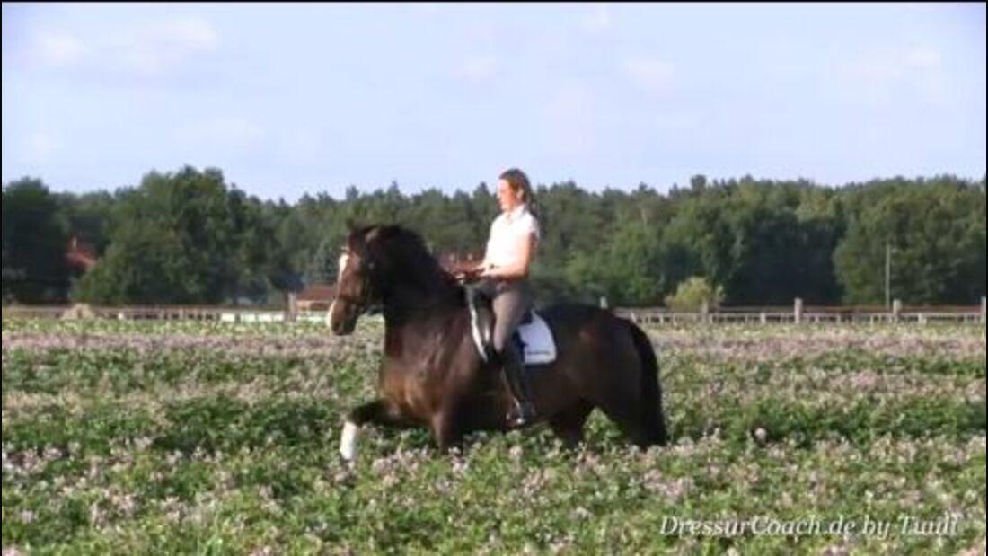 DressurCoach-Tipp 03 - Einfache Galoppwechsel mental (vorbe-)reiten