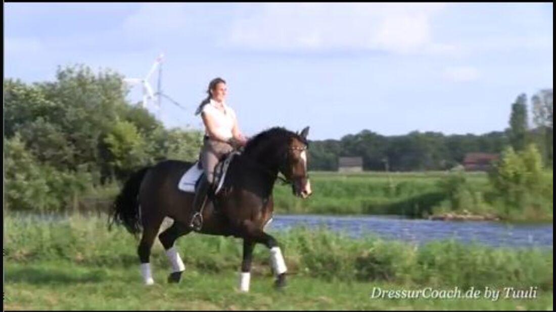 DressurCoach-Tipp 04 - Übung - Der doppelte Bogen für Losgelassenheit, Reaktionsfreude und Durchlässigkeit