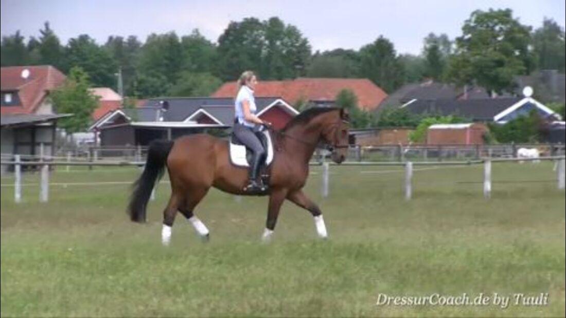 DressurCoach-Tipp 09 - Dein Pferd an Trabverstärkungen heranführen - Der Antritt zählt!