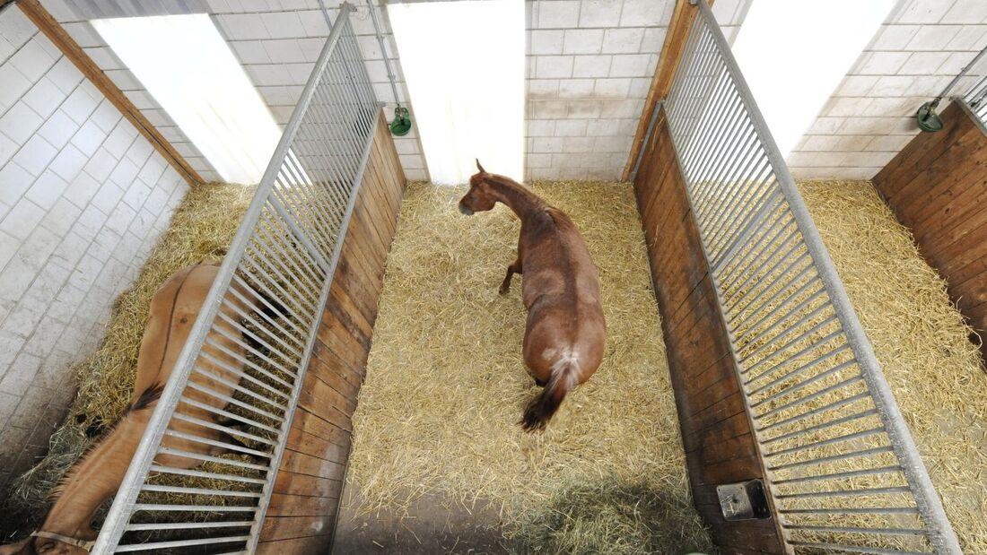 Ein Pferd steht in seiner Box.