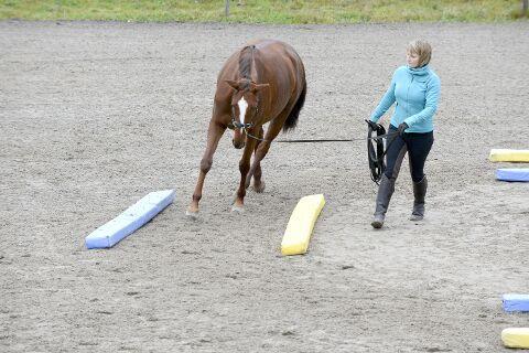 Equikinetik: Mehr Kraft und Schwung für Pferde