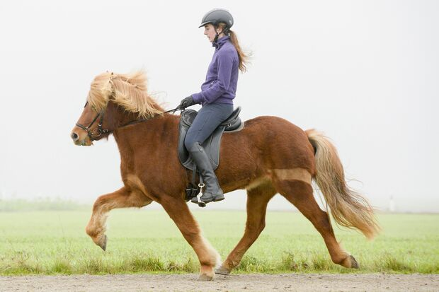 Frau reitet fuchsfarbenen Isländer vor der Sitzschulung