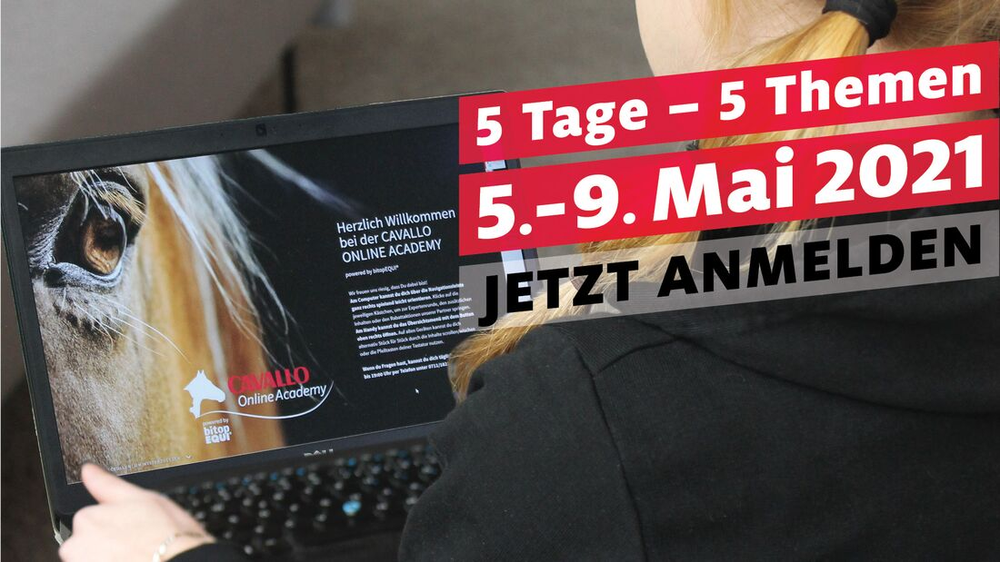 Frühbucherrabatt Cavallo Online Academy 2021