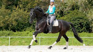 Galoppierendes Pferd auf dem Reitplatz