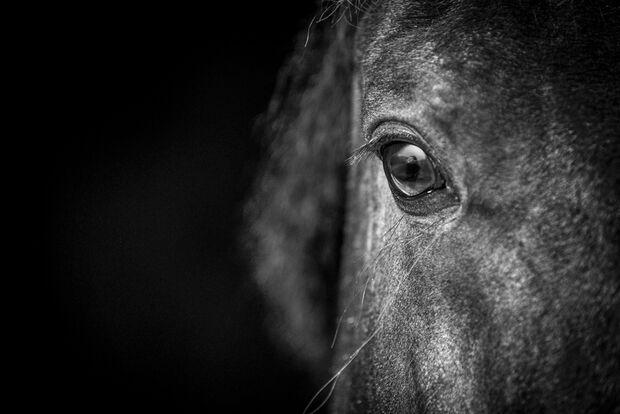 Gefühle bei Pferden