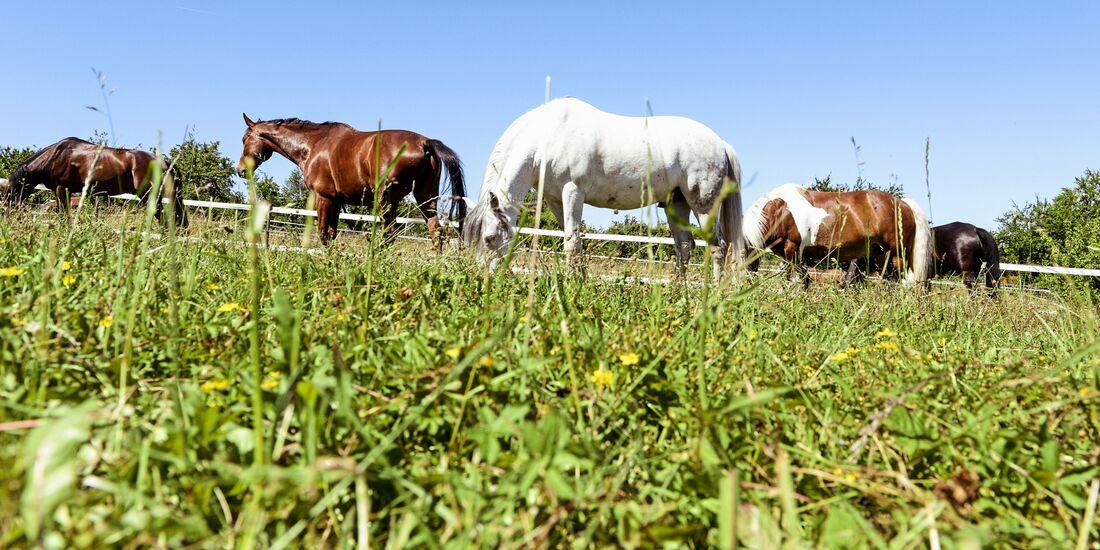 Grass Sickness