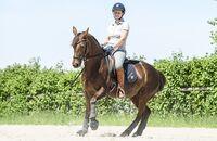 Klassisch reiten mit Quarter Horse