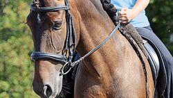 Konterschulterherein reiten