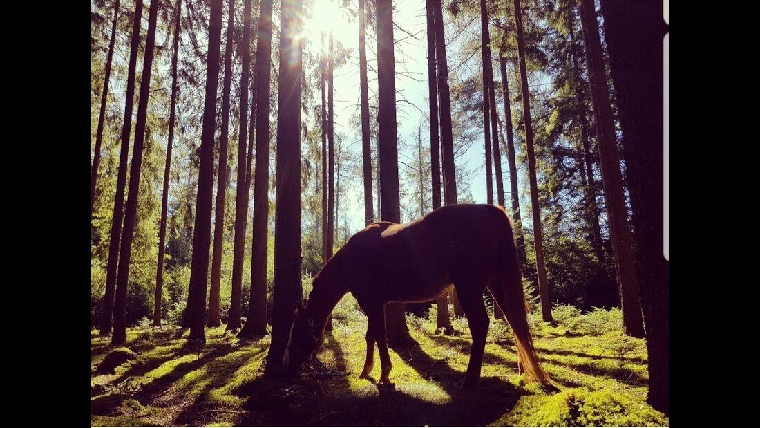 Mein Pferd in der Natur