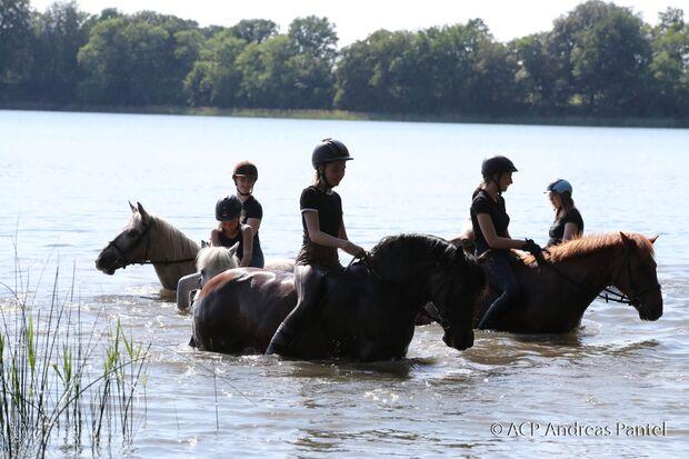 Mit den Pferden baden zu gehen, ist in Zislow für alle ein kleines Highlight