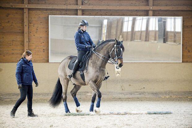 Pferd in Reithalle  bei der Cavaletti-Arbeit