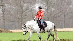 Pferd mit Reiterin auf einer Wiese im Trab