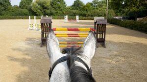 Pferd taxiert Hindernis