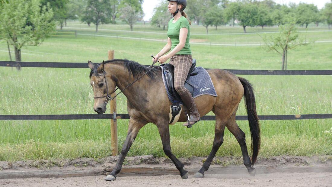 Pferd und Reiterin im Trab