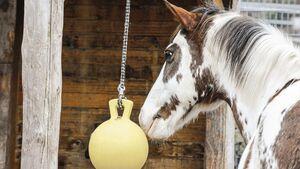 Pferde-Spielball