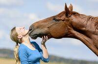 Pferdegedächtnis
