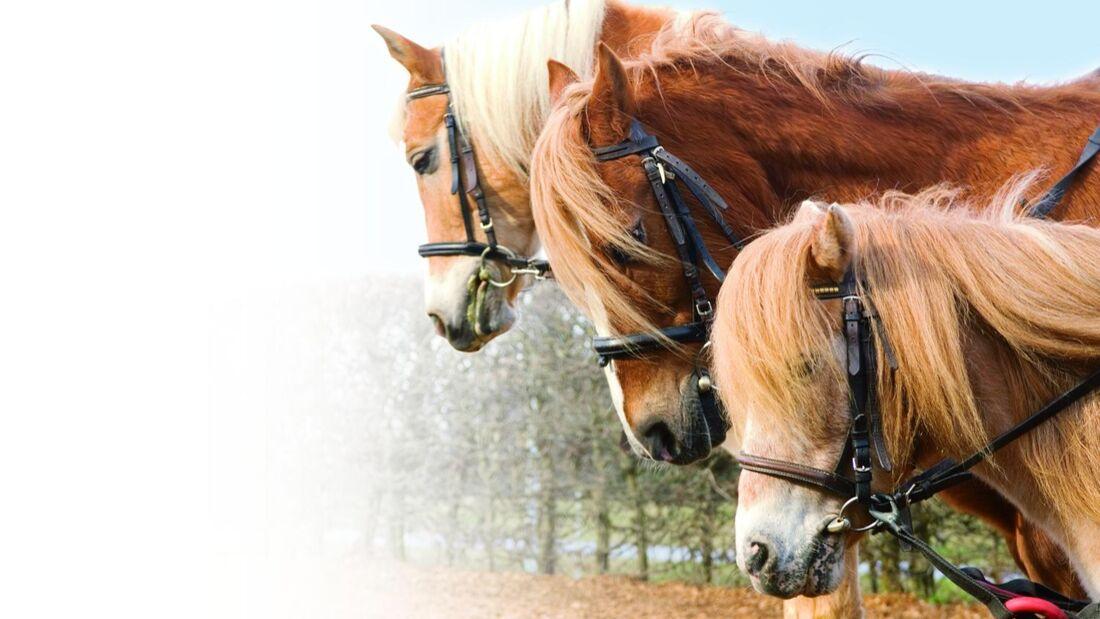 Ponys mit Ausbindern