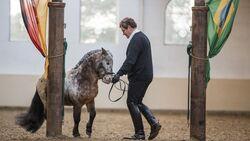 So geht das Pferd in die richtige Richtung