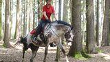 So trainieren Sie das Hinterteil Ihres Pferdes
