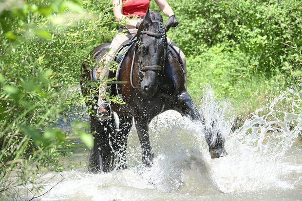 Spaß mit Pferden