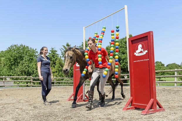 Spielt mein Pferd gerne?