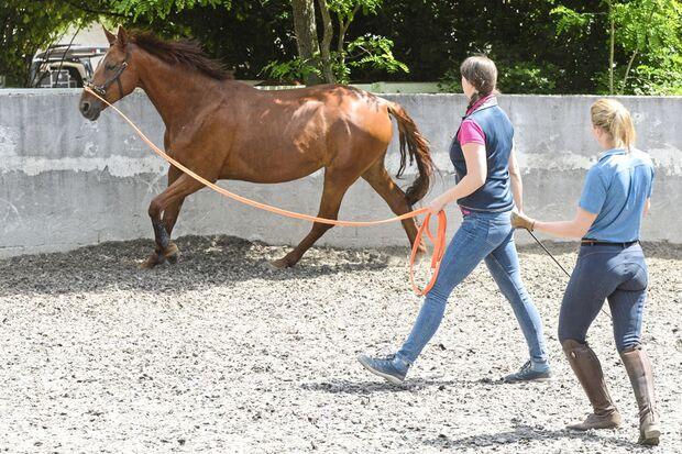 Stimm-Training für Reiter