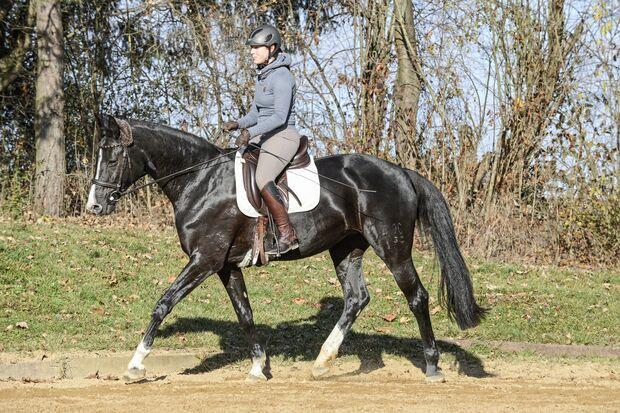 Top Thema Checks fürs Pferd