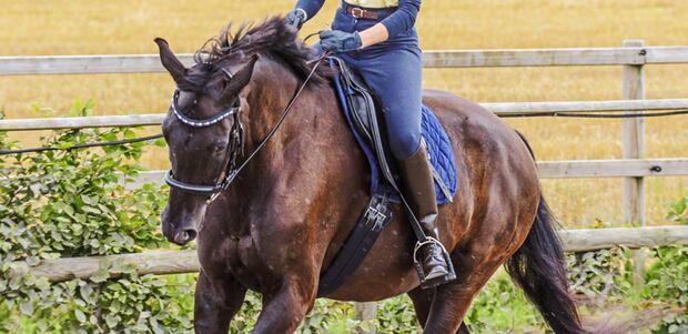 Training mit einem Pferd auf einem Reitplatz draußen