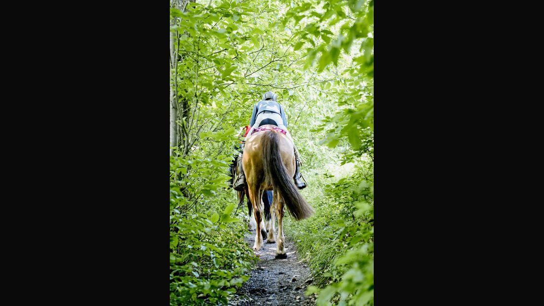 Wanderreiten durch den Schwarzwald