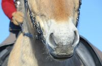 Was der Atem über Ihr Pferd verrät