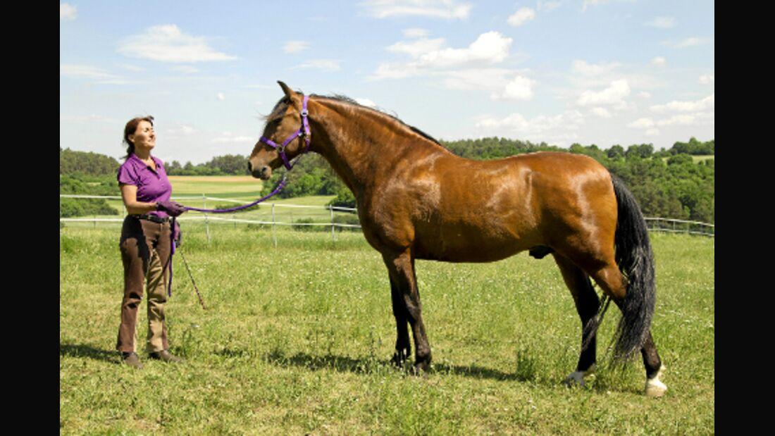 Welcher Gangtyp ist Ihr Pferd? Spanier