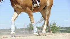 bandagiertes Pferd