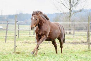 3 kranke Pferde mit Happy End - cavallo de