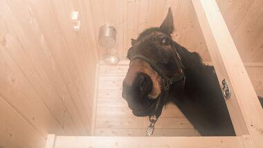 cav-0418-pferdesauna-9-vogelsang-mit-teaser (jpg)