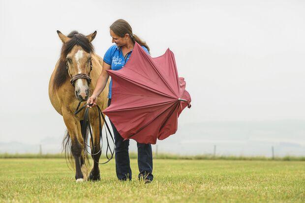 cav-201808-uebungen-fuers-pferdegehirn-6-auf-alle-faelle-lir7424-v-amendo (jpg)