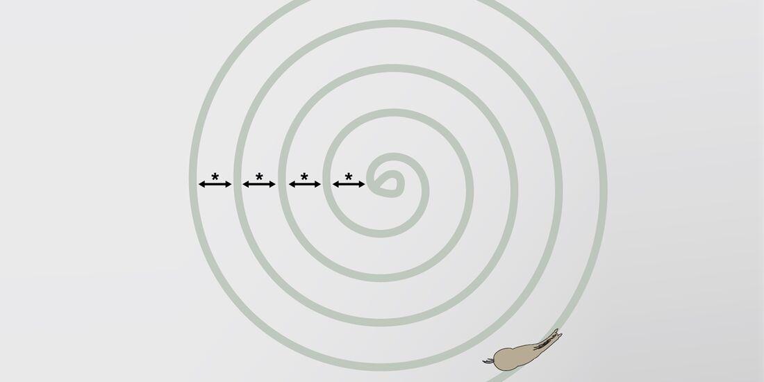 cav-201810-reitweisen-mixen-grafik-ziel-2-spirale