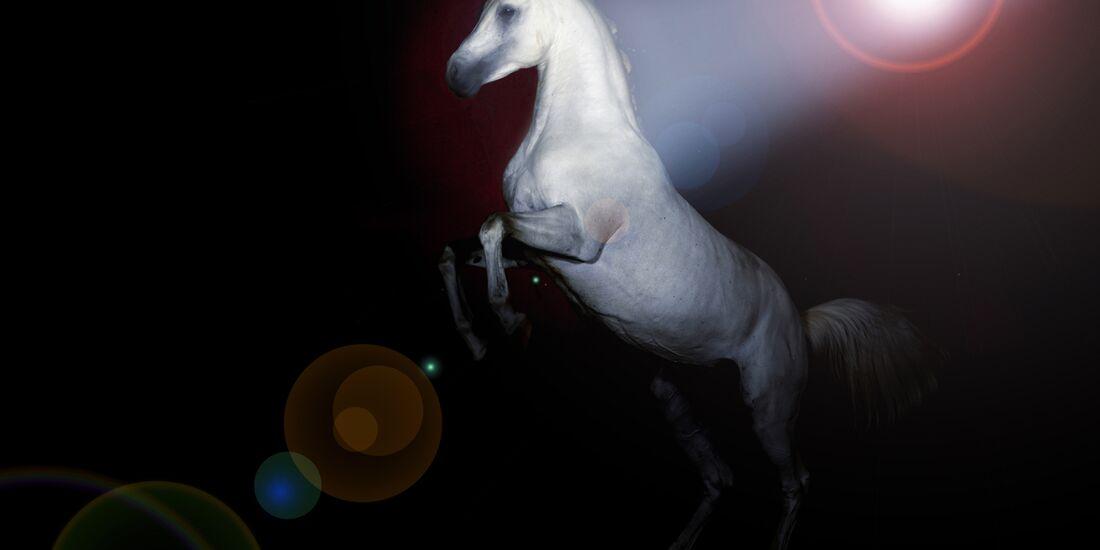 cav-201901-showpferde-lir9531-mit-TEASER-v-amendo (jpg)