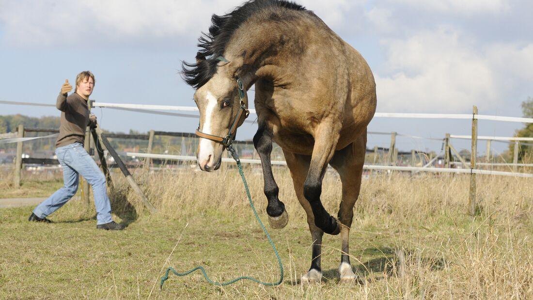 cav-201902-uebereifrige-pferde-lir7782-mit-TEASER (jpg)